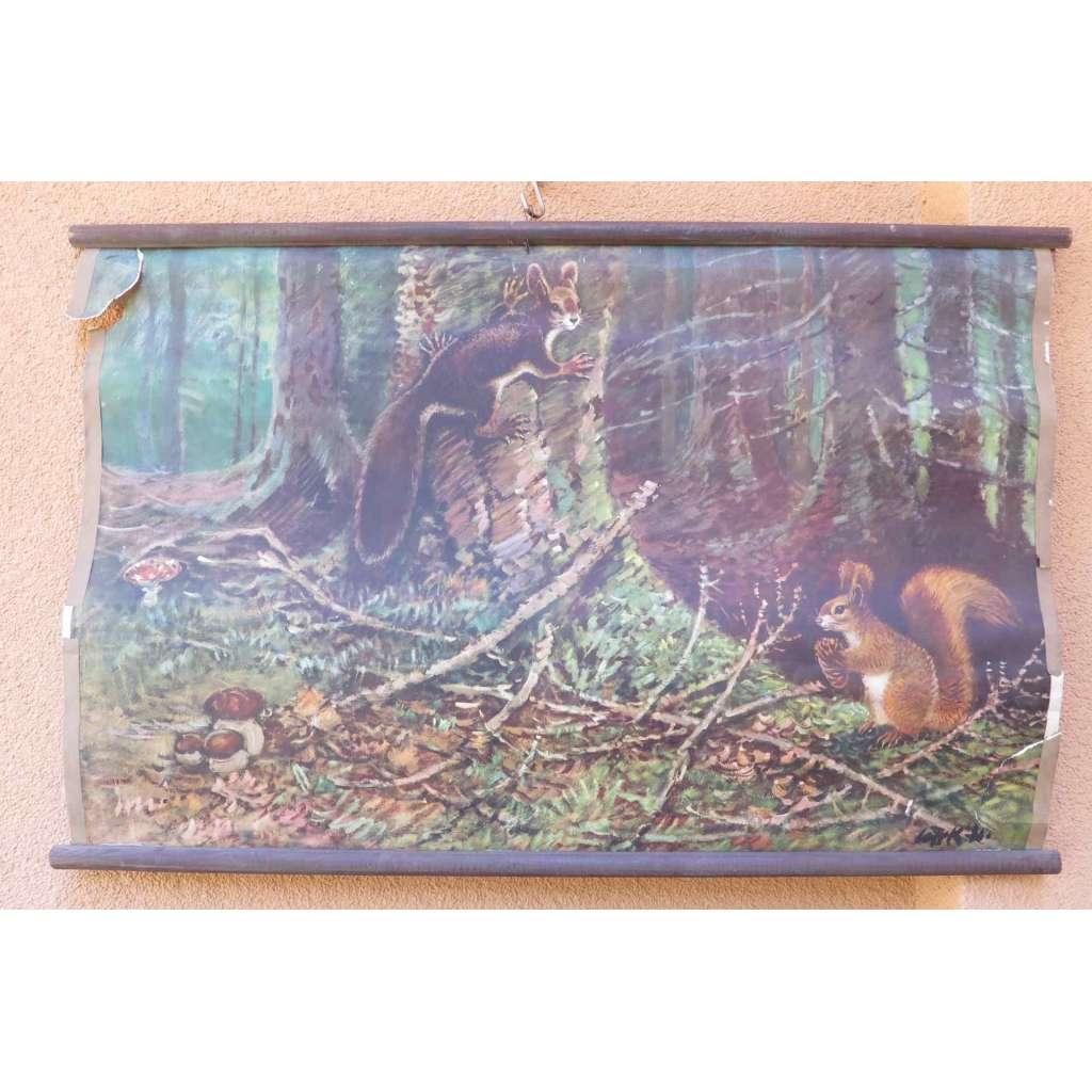 Veverky v lese - školní plakát