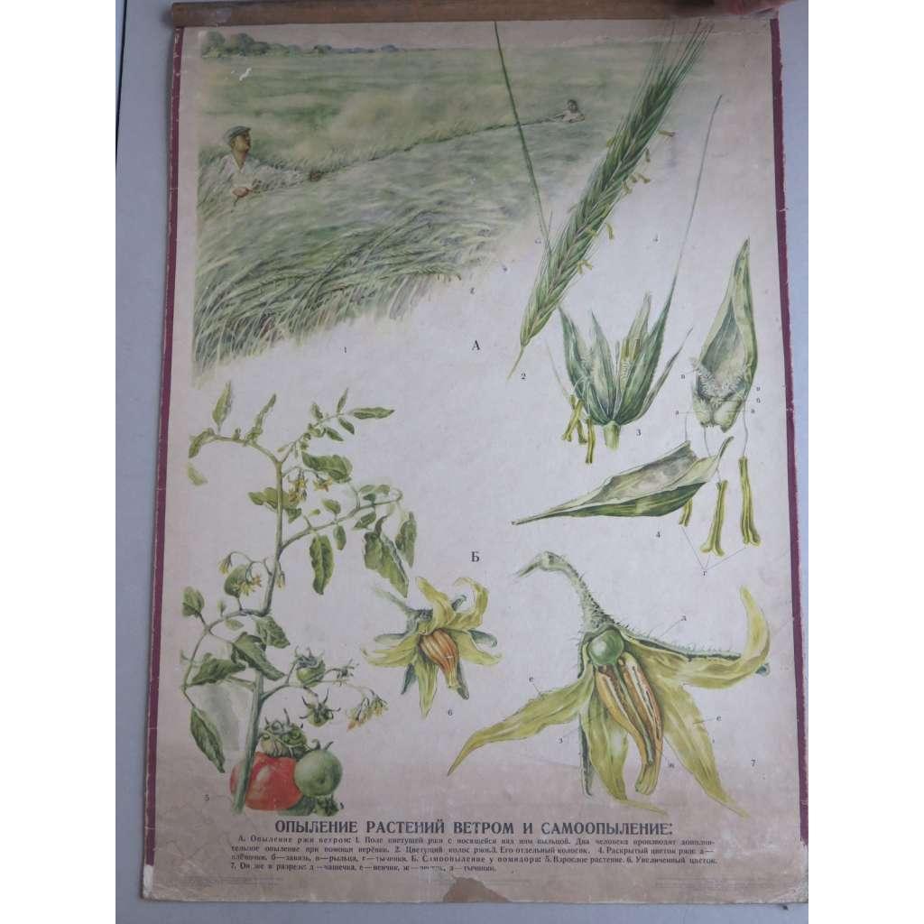 Opylení rostlin větrem a samoopylení - obrazy rostlin - přírodopis - školní plakát