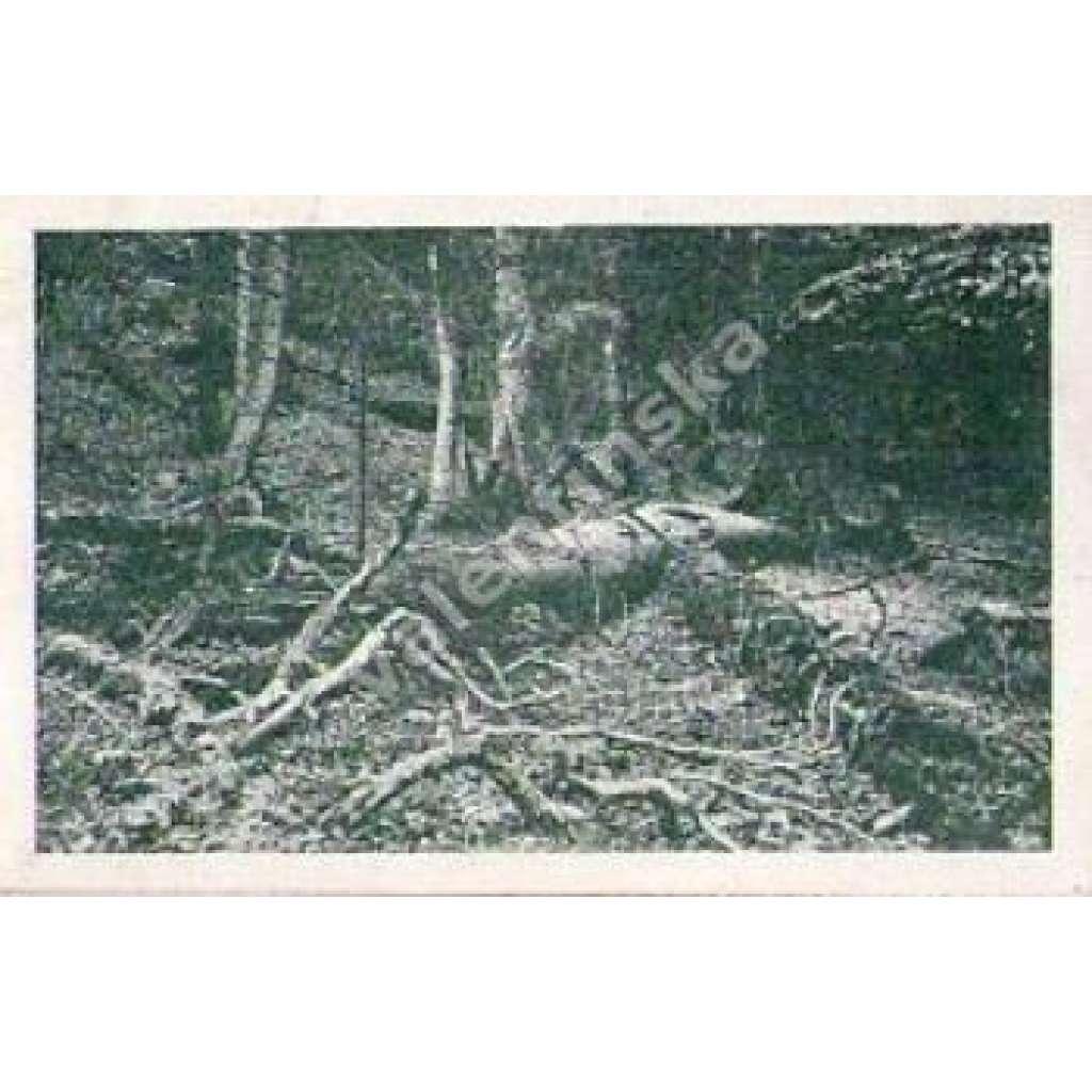 Prales na Boubíně