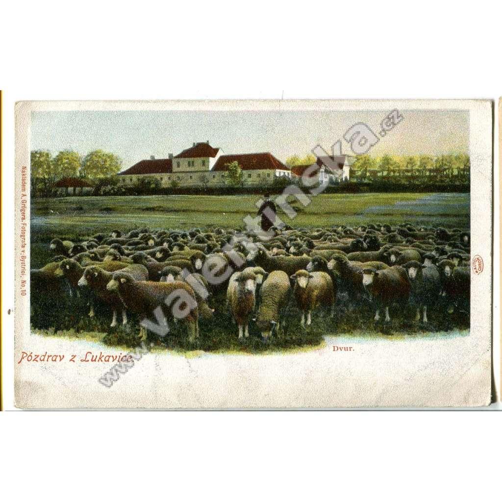 Lukavice, Rychnov nad Kněžnou, ovce, zvířata
