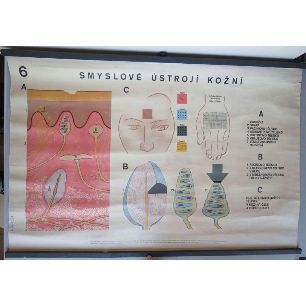 Smyslové ústrojí kožní - přírodopis - školní plakát
