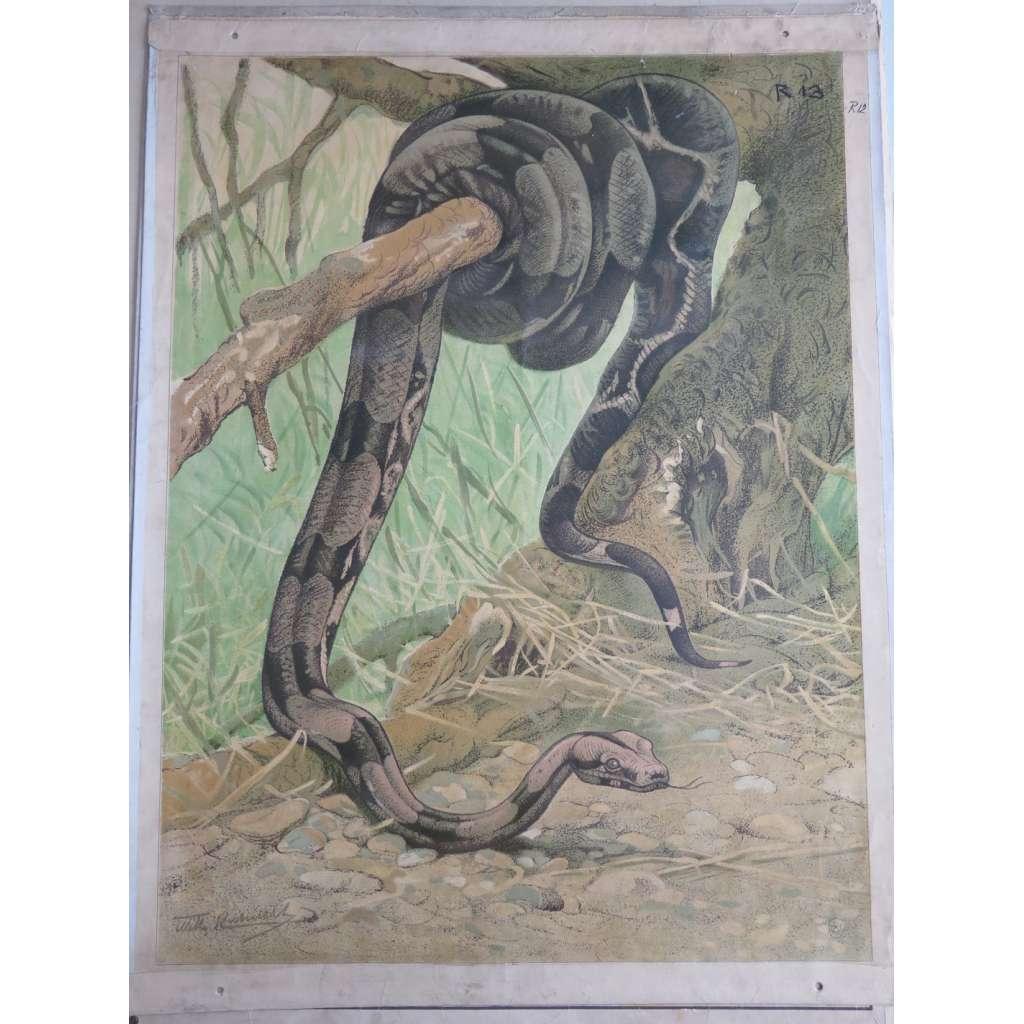 Had - přírodopis - školní plakát