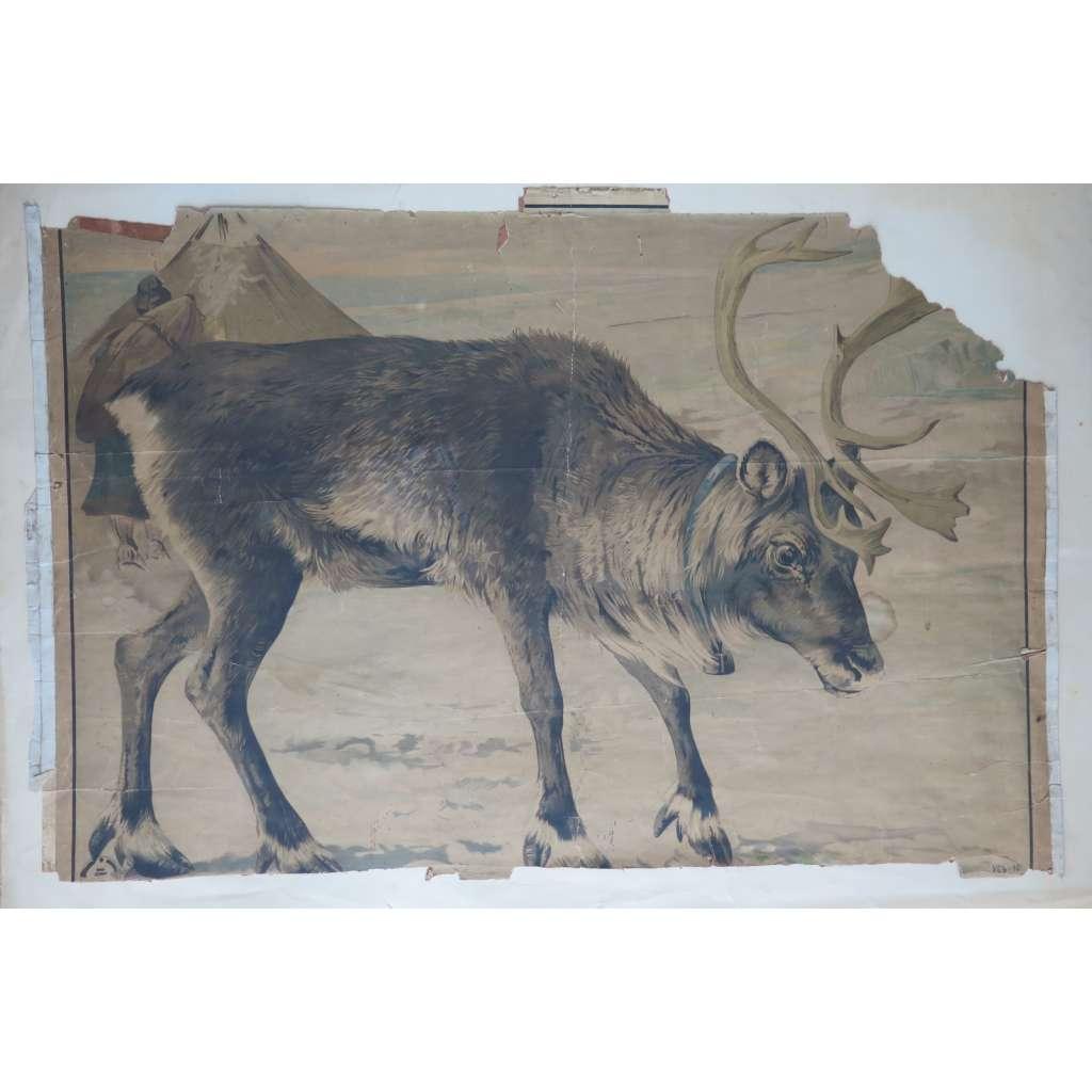 Sob, jelen - přírodopis -  školní plakát