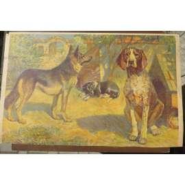 Pes - psi - přírodopis - školní plakát