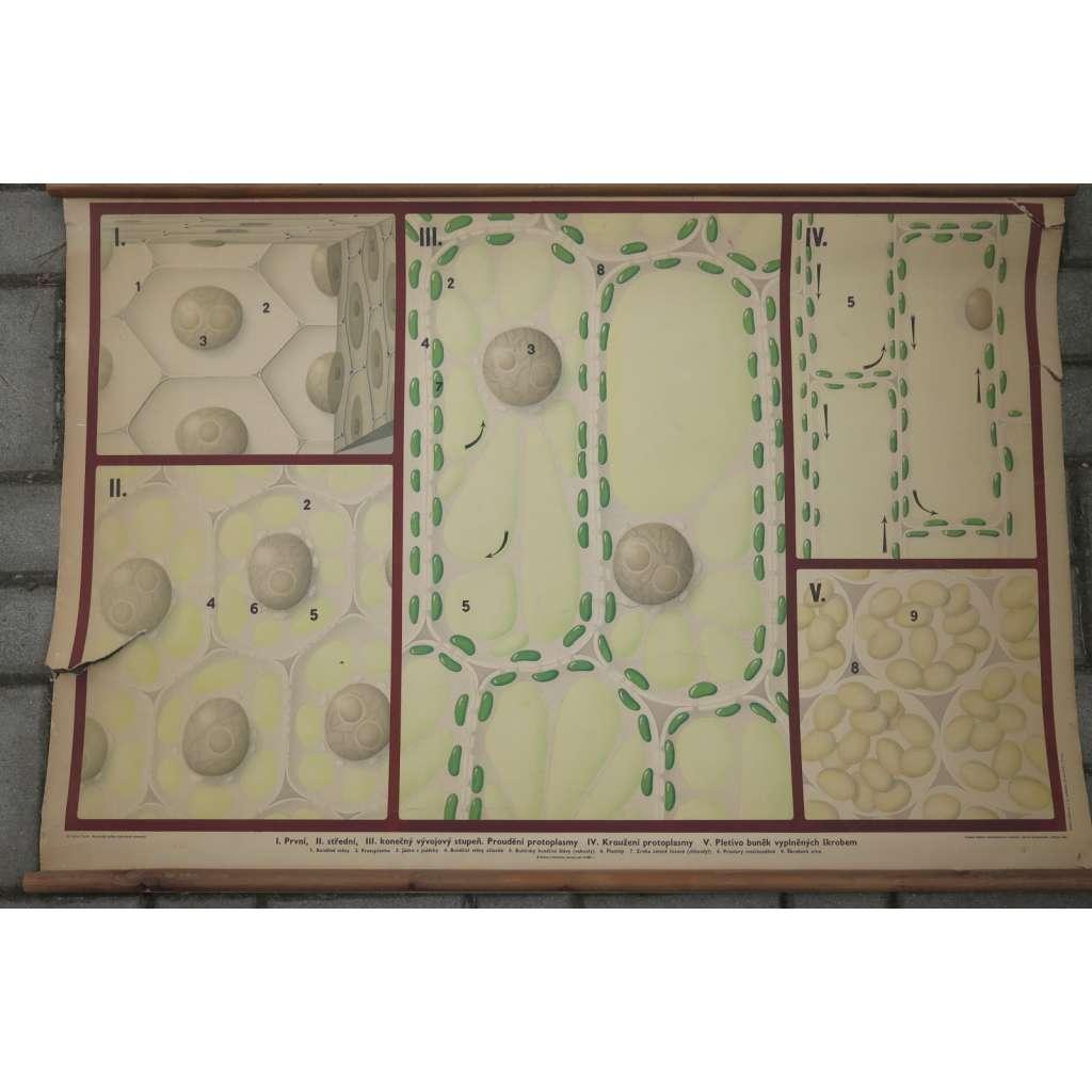 Rostlinná buňka- přírodopis - školní plakát