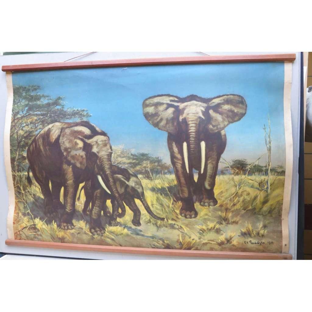 Sloni -slon - přírodopis - školní plakát