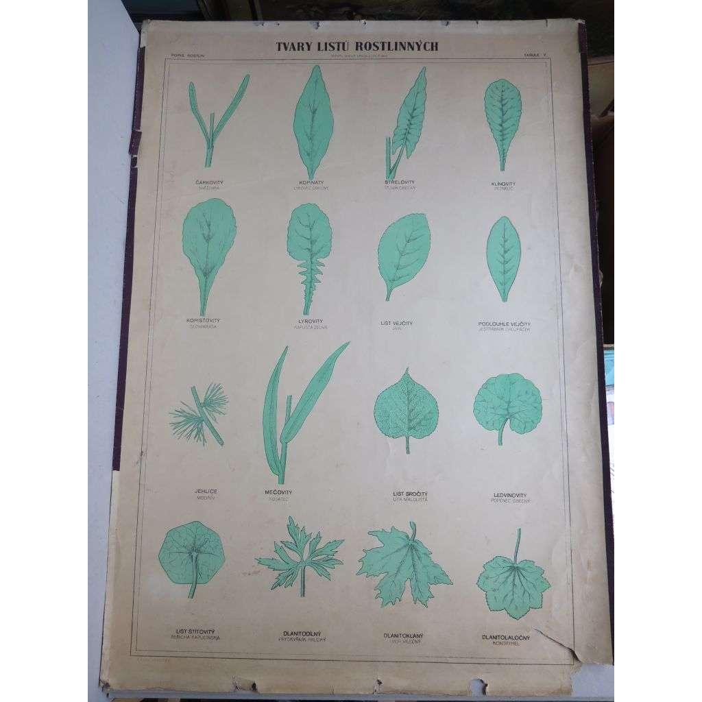Tvary listů rostlinných - rostliny - přírodopis - školní plakát