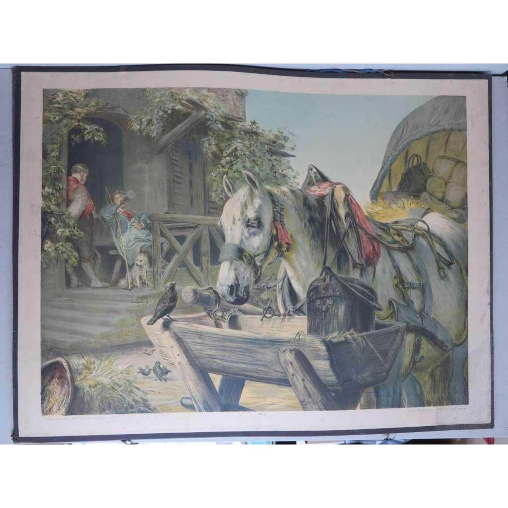 Kůň - Das Pferd - zvířata - školní plakát