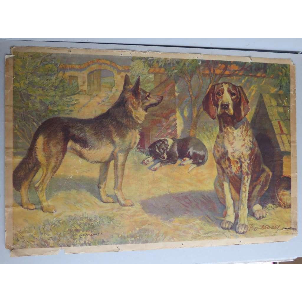 Pes, psi, zvířata - přírodopis - školní plakát