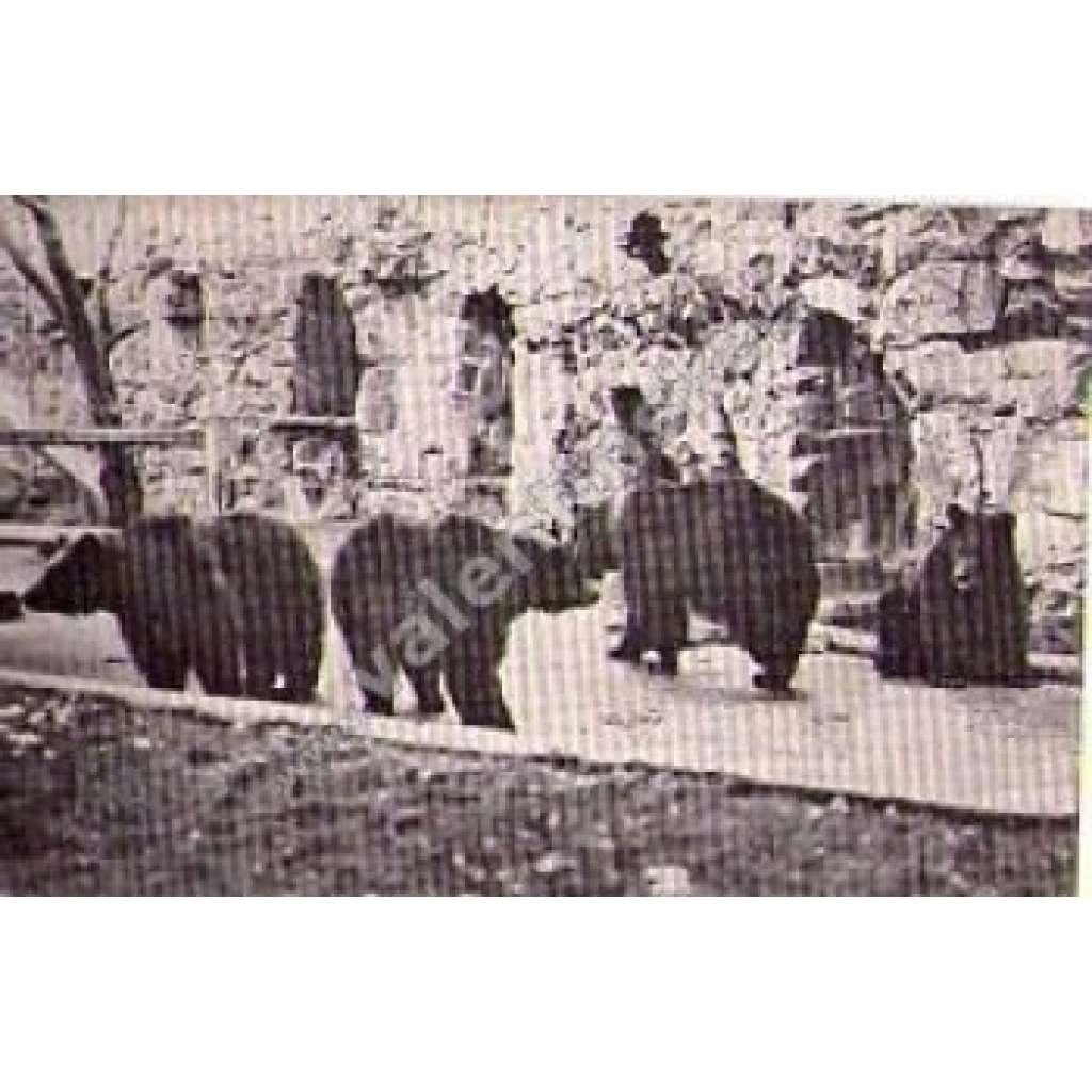 Medvídkové v Praze