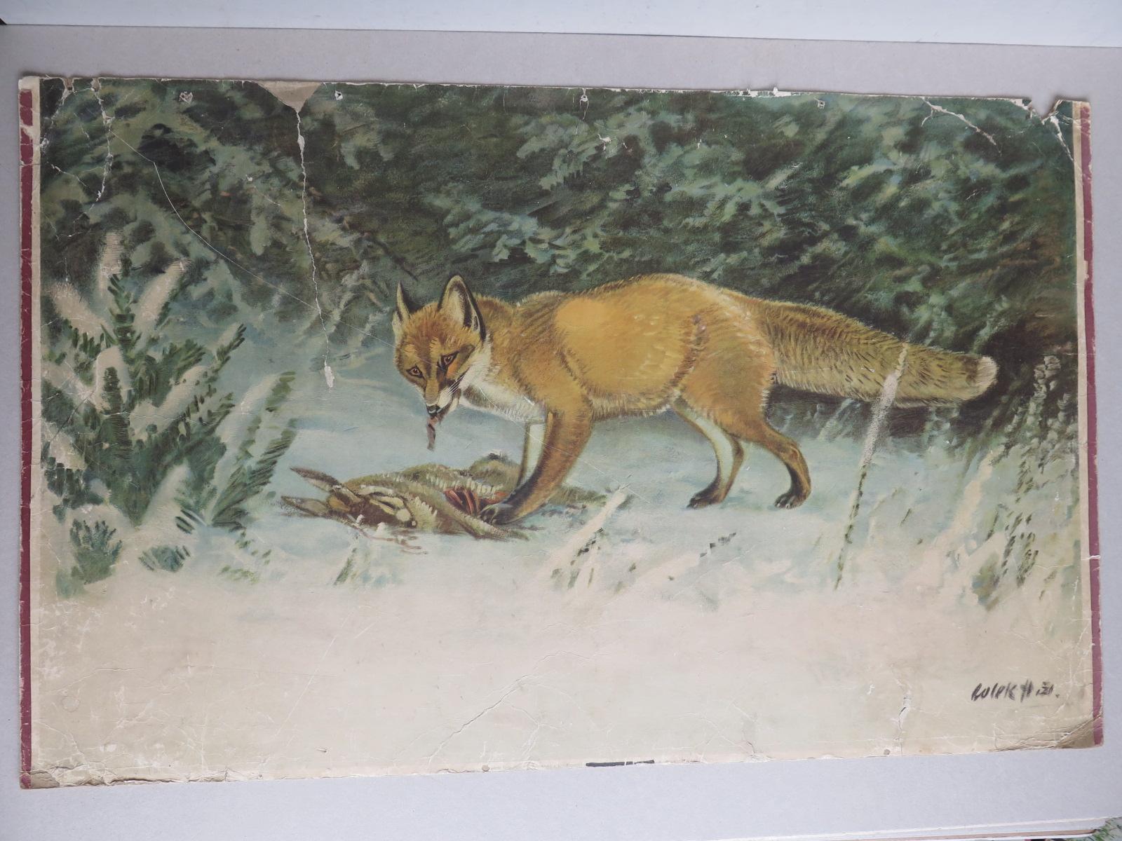 4bb7fa331c Liška - zvíře - přírodopis - školní plakát
